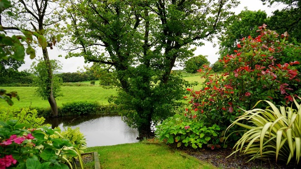 A large garden with pond Barnstaple North Devon.